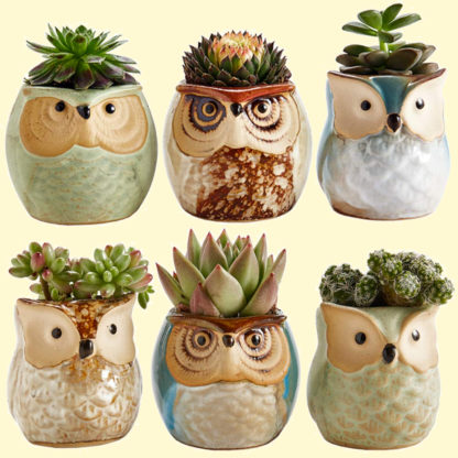 Set of 6 small owl planters ideal for succulents