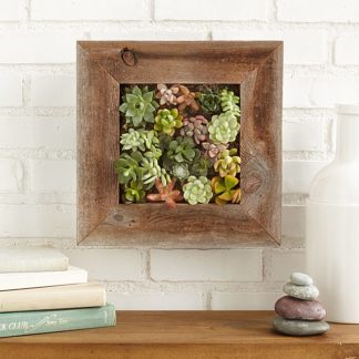 Succulent living wall planter kit from Uncommon Goods